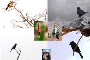 02-Uccelli_W.jpg