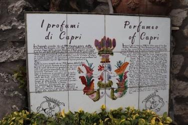 CAPRI 33.jpg