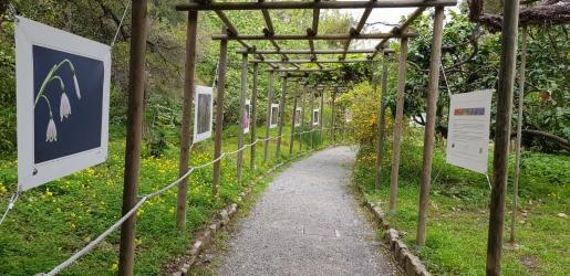 Giardini_Hanbury18.jpg