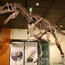 Il parco paleontologico dei dinosauri