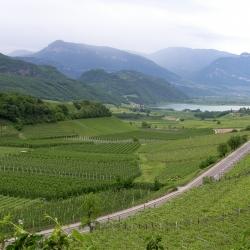 La Strada del Vino dell'Alto Adige