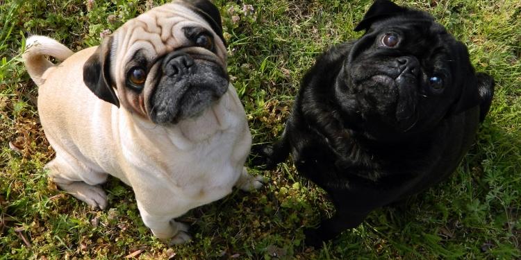 In Trentino oltre 1.600 hotel pet friendly
