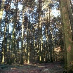 Il sentiero del lupo a Montelupo Albese