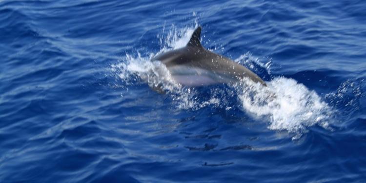 Alla ricerca dei delfini nel mar jonio