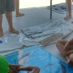 5Escursione alla ricerca dei delfini.JPG