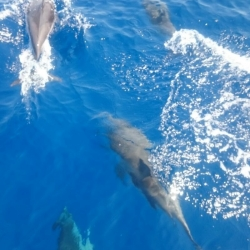 10Escursione alla ricerca dei delfini.JPG