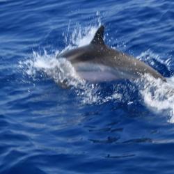 22Escursione alla ricerca dei delfini.JPG