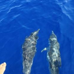 24Escursione alla ricerca dei delfini.JPG