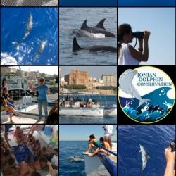 36Escursione alla ricerca dei delfini.png