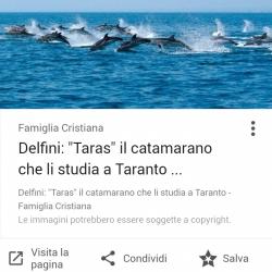 37Escursione alla ricerca dei delfini.png