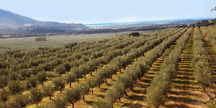 Abruzzo: il turismo legato al vino e all'olio in crescita