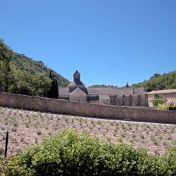 Tour della Provenza e Camargue7.jpg