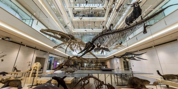 MUSE: il Museo della Scienza a Trento