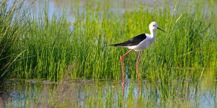 Una giornata sul delta del Po