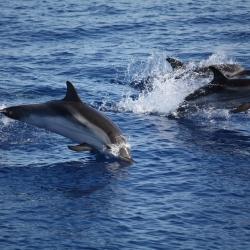 Un tuffo tra gli amici delfini