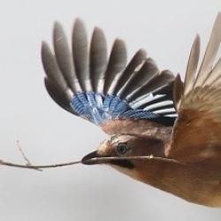 Uccelli di città