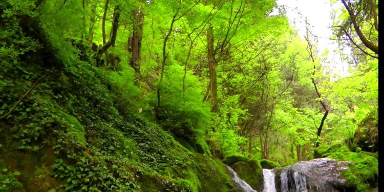 La ciprissetta di Fontegreca e la valle del Lete