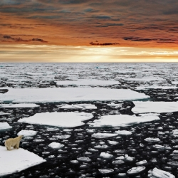 9 Marco Gaiotti, Un solitario orso polare nell'Artico.jpg