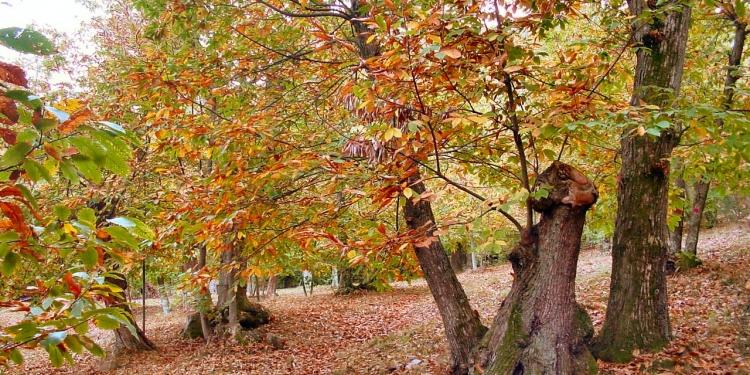 Monte Amiata, castagne, funghi e sapori di festa